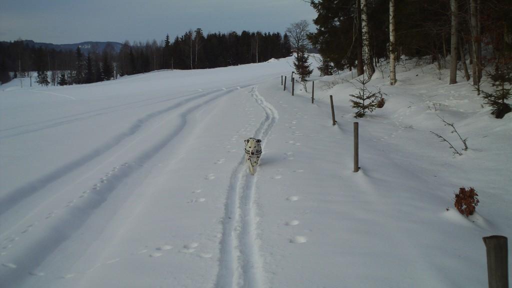 Borreskogen 033