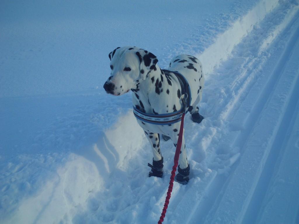 Skitur 035